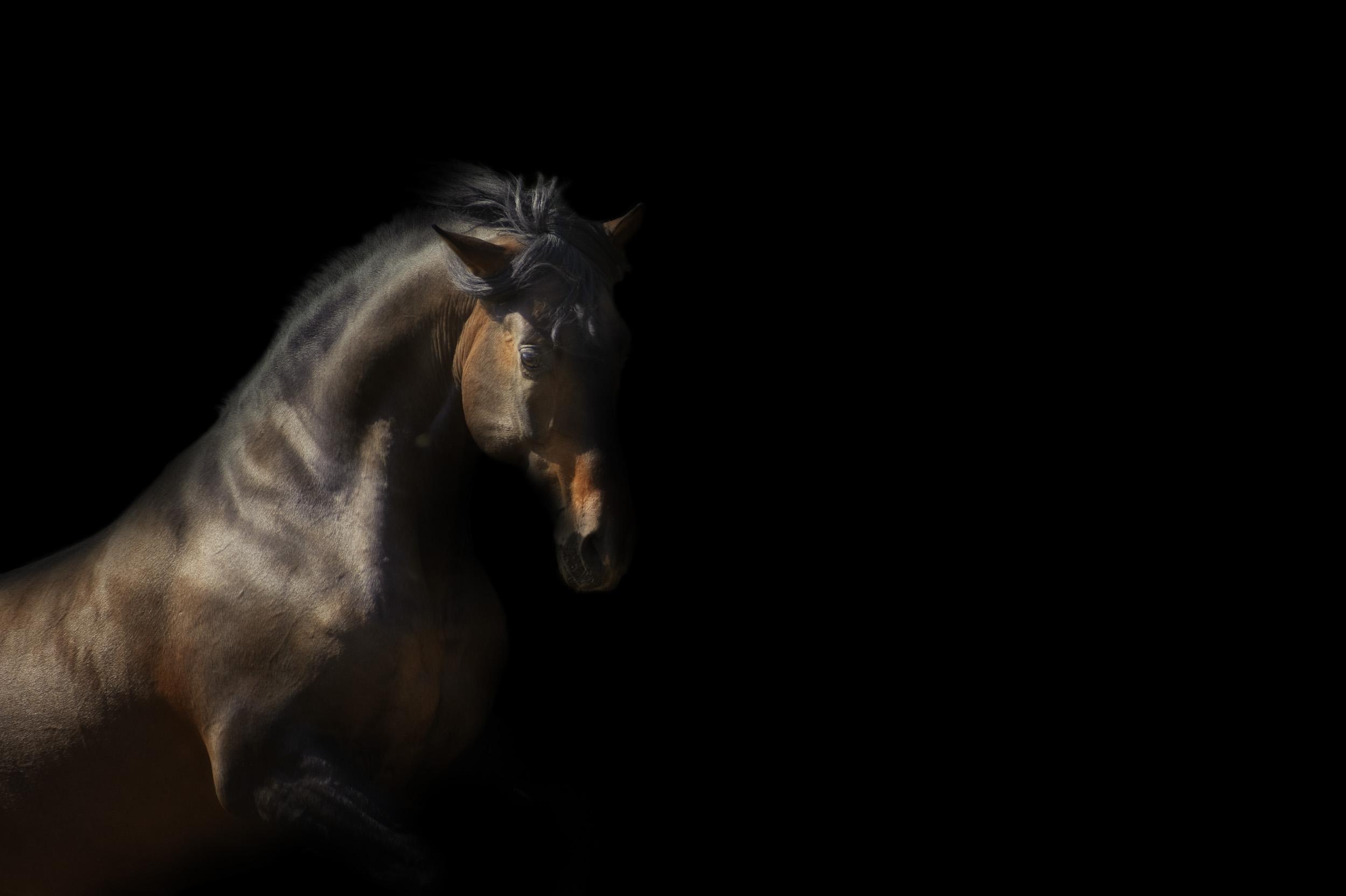 cheval espagnol nathalie hupin photographie équestre